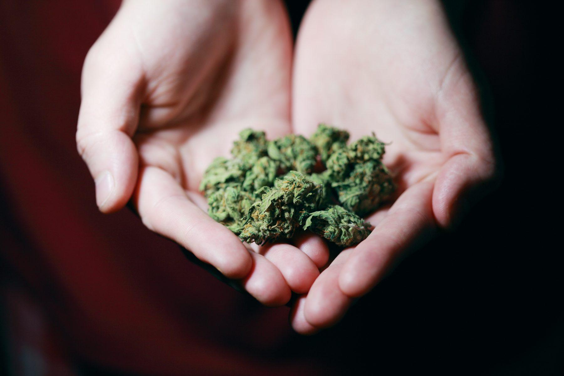 Bild von Cannabis.